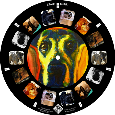 A dog rescue highlights boxers on a custom reel