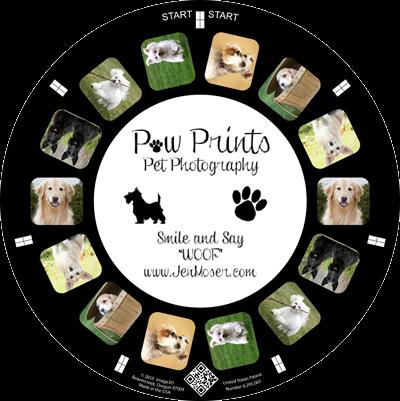 A pet photographer makes a custom reel portfolio